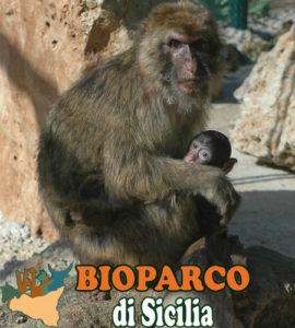 bioparco di sicilia