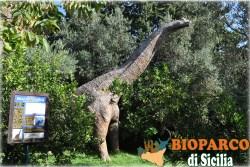 Bioparco di Sicilia - brachiosaurus