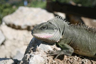 Bioparco di Sicilia - dragone d'acqua