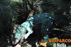 Bioparco di Sicilia - drysosaurus