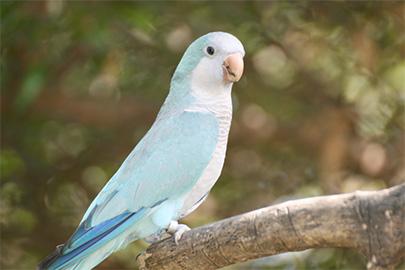 Bioparco di Sicilia - pappagallo monaco