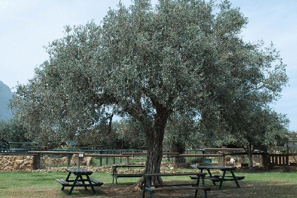Bioparco di Sicilia - Aree picnic