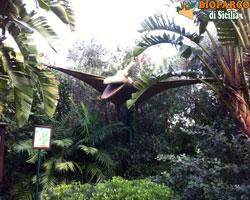Bioparco di Sicilia - pteranodonte