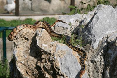 Bioparco di Sicilia - serpente citello