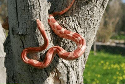 Bioparco di Sicilia - serpente del grano