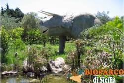 Bioparco di Sicilia - triceratops